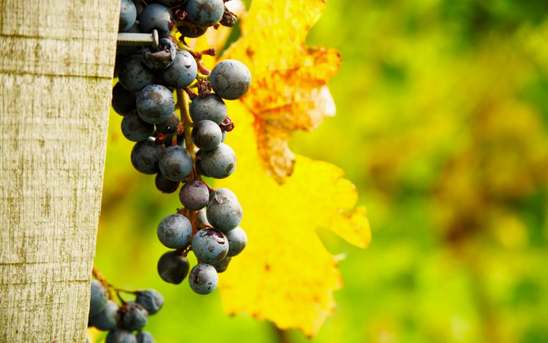 RebKulTour | 3. Juni 2018 | Kulinarische Weinwanderung